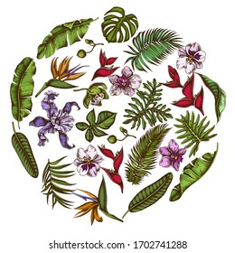 Round floral design with colored monstera, banana palm leaves, strelitzia, heliconia, tropical palm leaves, orchid