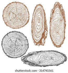 Round and oval cross section of tree trunk. Wooden texture with  rings.  Hand drawn sketch.