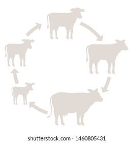 Round Stages of cow growth set. Milk farm. Breeding cow. Beefs production. Cattle raising. Calf grow up animation circle progression. Silhouette vector.