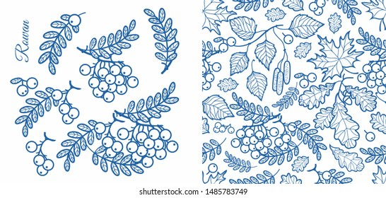 Rowan, ash, mountain ash with ashberry.Leaves of mountain-ash berries in the stained illustration. Foliage forest leaf vector. Autumn leaves seamless pattern