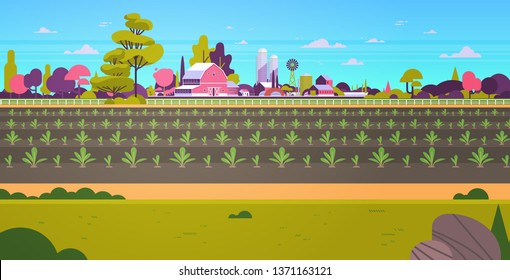rows young freshly germinated plants vegetable plantation agriculture and farming concept farmland field countryside landscape background flat horizontal