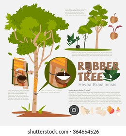 Rubber tree or Hevea brasiliensis with detail info graphic elements. Milk of rubber tree. Benefit. Prodcut from rubber. Typographic design - vector illustration