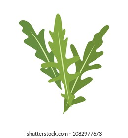 Rucola or arugula icon. vector illustration, isolated on white background.