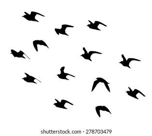 Ruff in flight silhouettes