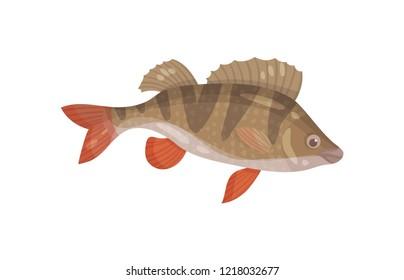 Ruffe fish with spiny fins. Predatory marine animal. Sea creature. Underwater life theme. Flat vector design
