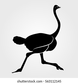 Running african Ostrich icon on a white background
