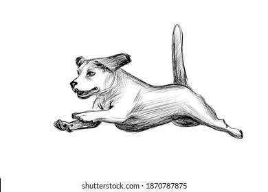 Running dog hand drawn sketch. Beagle dog jumping black graphic sketch isolated on white background. Vector illustration