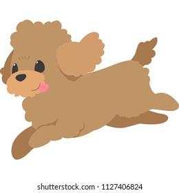 Running dog (toy poodle)