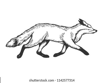 Running fox animal engraving vector illustration. Scratch board style imitation. Black and white hand drawn image.