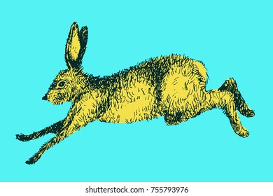 Running hare rabbit vector illustration. Hand drawn ink jumping bunny