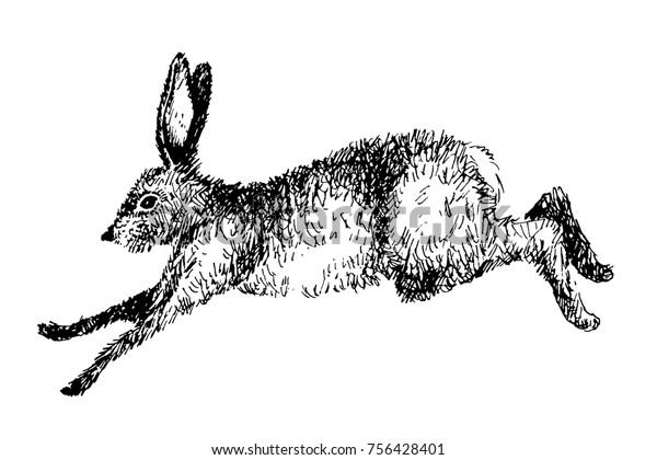 Running hare rabbit vector illustration. Hand drawn ink jumping bunny