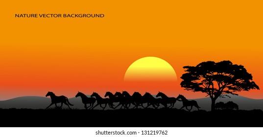 running herd of natural background