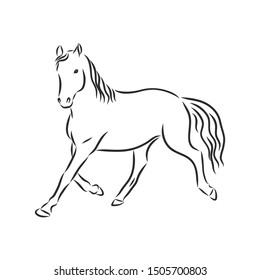 Running horse, contour vector illustration