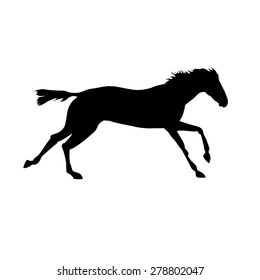 Running horse Silhouette realistic drawing on isolated background