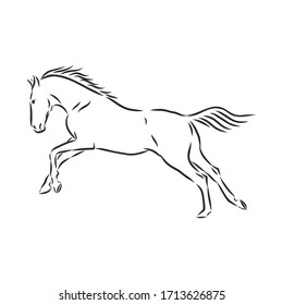 running horse vector illustration - black and white outline. beautiful horse, horse icon, vector sketch illustration