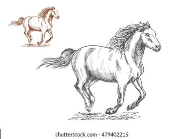 Running horses pencil sketch portrait. Brown and white mustang stallions with freedom gallop gait