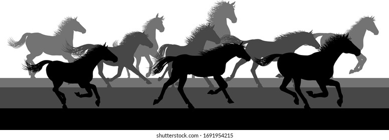 A running or stampeding herd of wild horses in silhouette