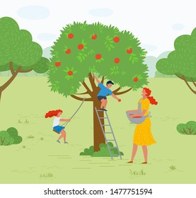 Rural area vector, farming woman with basket picking apples in garden. Playing kids family leisure,daughter and son of mother smiling character working. Pick apples concept. Flat cartoon