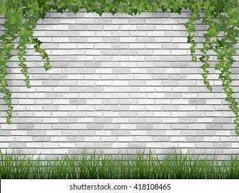 Rural background. Ivy and grass on white brick wall background.