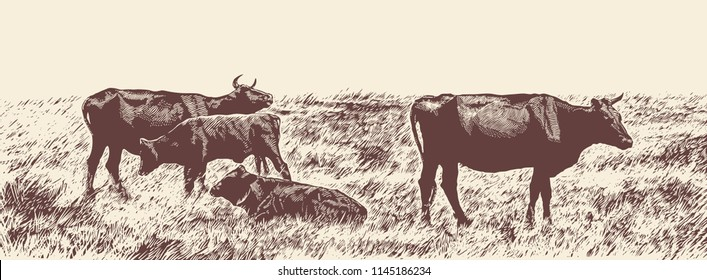 Rural Landscape With Cows. Hand Drawn Vector Illustration Engraving Style.