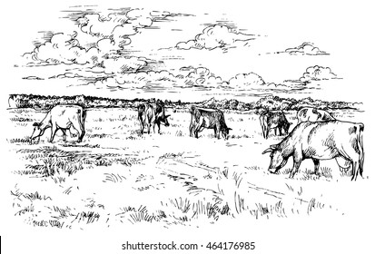 Rural landscape with cows - hand drawn vector illustration, isolated on white