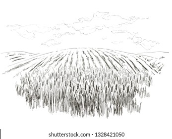 Rural landscape field wheat Hand drawn vector Countryside engraving