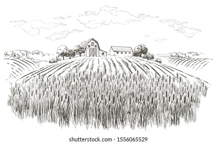 Rural landscape field wheat, old Barn, house, trees, plants, fences and other elements, forest panorama. Hand drawn vintage vector realistic countryside engraving