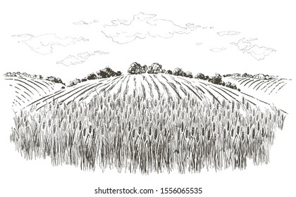 Rural landscape field wheat, trees, plants, forest panorama. Hand drawn vintage vector realistic countryside engraving