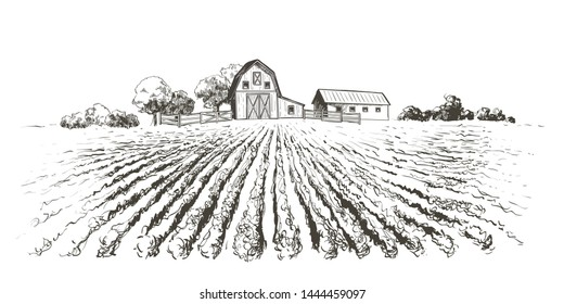 Rural landscape ripening field, agricultural landscape. Old Barn, house, trees, plants, fences and other elements, panorama. Hand drawn vector sketch illustration