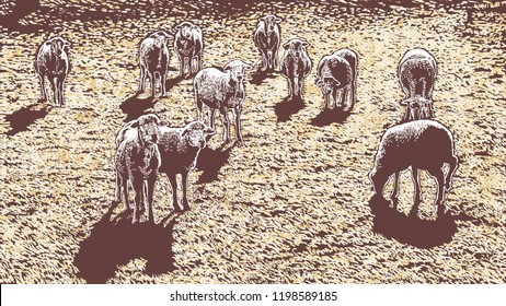 Rural Landscape With Sheeps. Hand Drawn Vector Illustration. Engraving Style. aspect ratio 16:9