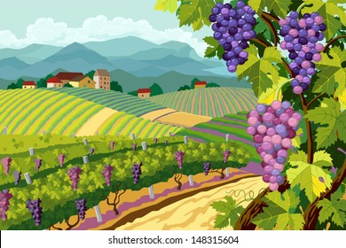 Rural landscape with vineyard and grapes bunches