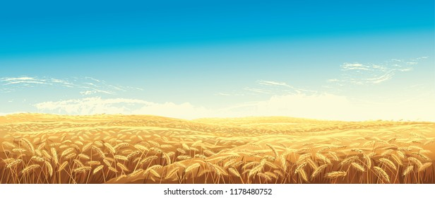 Rural landscape with wheat field and the blue sky on background. Vector illustration.