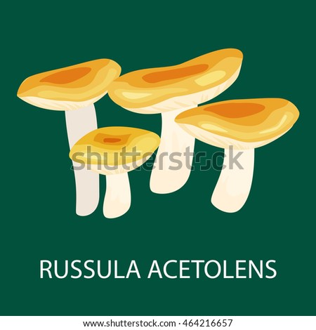 Russula Acetolens Mushrooms Food Isolated Fresh Stock Vector