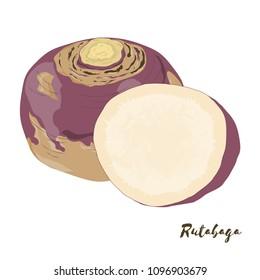 Rutabaga. Vegetables for your design. Vector illustration.