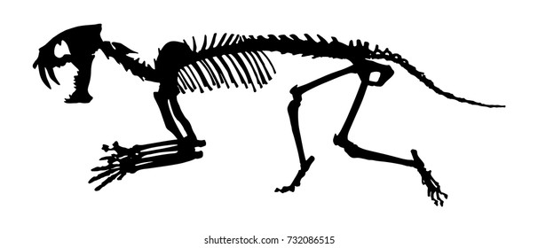 Saber - toothed tiger ( Hoplophoneus primaevus ) skeleton . Silhouette vector . side view .