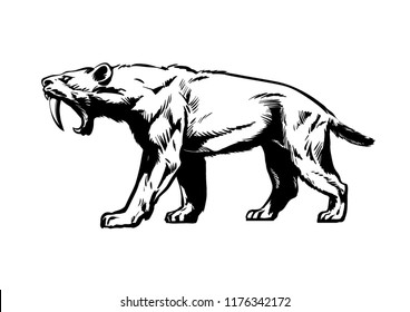 Saber toothed tiger. Smilodon. Saber-toothed cat. Prehistoric predator of  ice Age. Hand drawn sketch style vector illustration isolated on white background.
