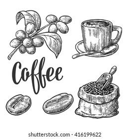 Sack with coffee beans with wooden scoop, cup, branch with leaf and berry. Hand drawn sketch style. Vintage vector engraving illustration for label, web.  Isolated on white background