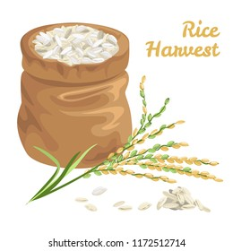 Sack of rice isolated on white. Vector illustration in flat style. Rice harvest concept.