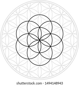 Sacred geometry is the flower of life, the sixth day of creation from Genesis