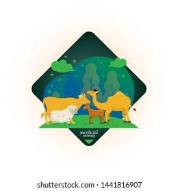 Sacrificial animal such us cow, lamb, camel and sheep for Eid al Adha