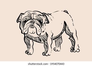 Sad French Bulldog vector illustration