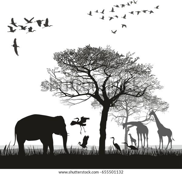 Safari with giraffes, herons, geese and the elephant