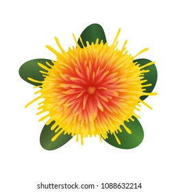 Safflower plant. Isolated on white background. Vector illustartion. Realistic yellow flower. Medical herb. Herbaceous plant. Topview.  Flat lay.