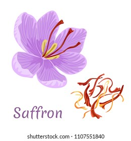Saffron flower isolated on white background. Dried spice saffron threads. Crocus. Template for packaging design, label, banner, poster, icon. Vector illustration in flat style.