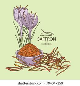 Saffron: flower and saffron stamens. Vector hand drawn illustration.