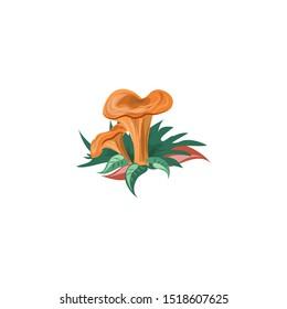 Saffron milk cap mushroom vector illustration in flat cartoon style