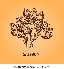 Saffron. Natural spices. Compilation of vector sketches. Kitchen herbs and spice. Vintage style. Hand drawn.