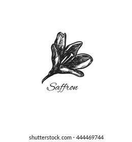 Saffron. Vector hand drawn illustration