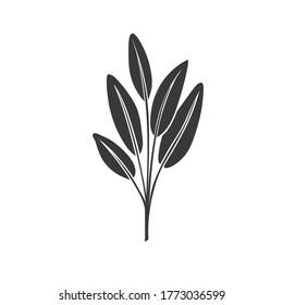 Sage glyph icon. Culinary herbs. Monochrome condiment vector illustration.