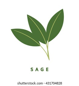 sage herb, food vector illustration, isolated logo